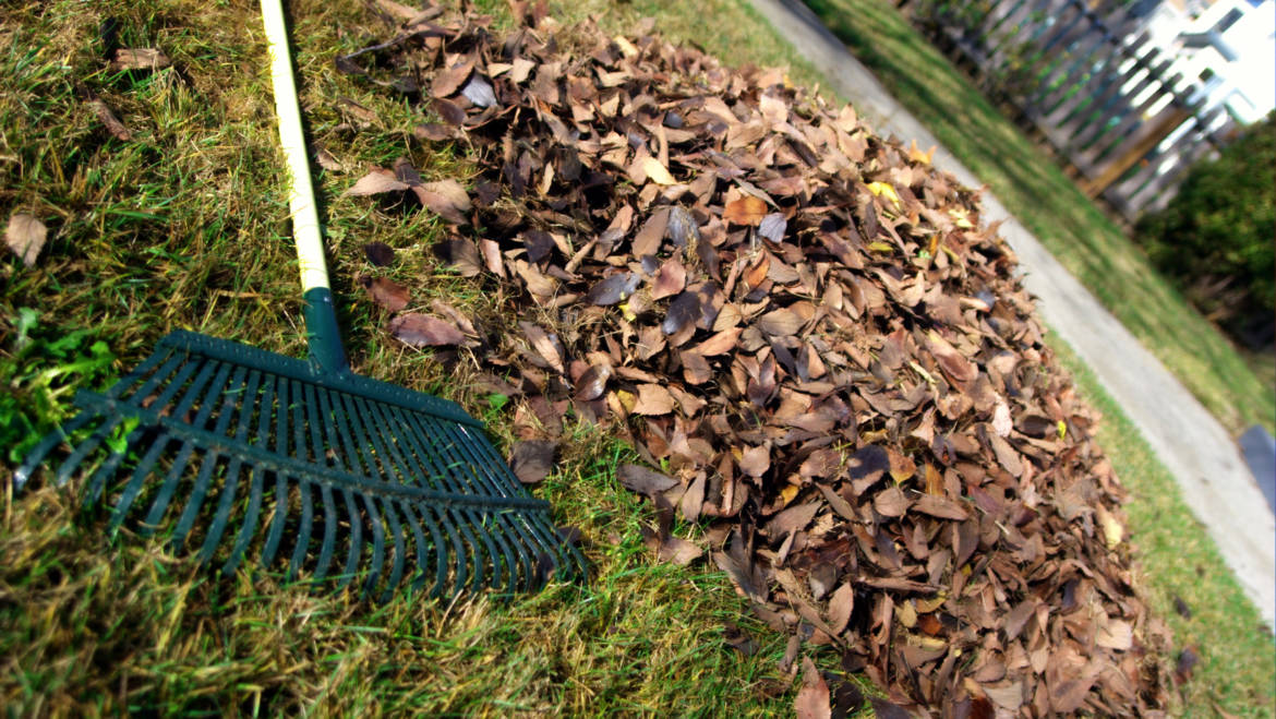 Yard Waste – Village Residents Only